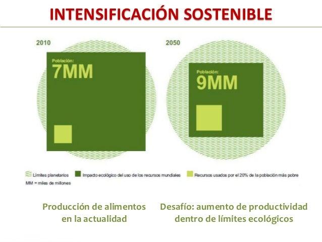 Intensificación Sostenible:Mejoramiento de la productividad y rentabilidad y reducciónde impacto de agricultura sobre el e...