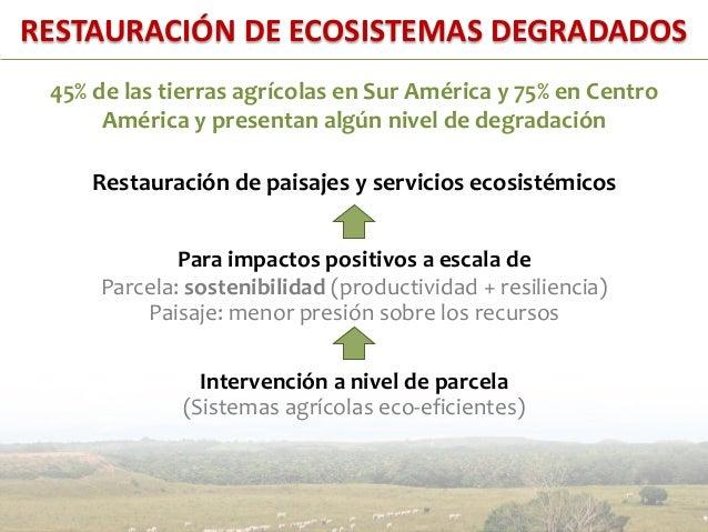 Restauración de ecosistemas degradados• Colombia – Llanos Orientales:Potencial de secuestro de carbonoen pasturas degradad...