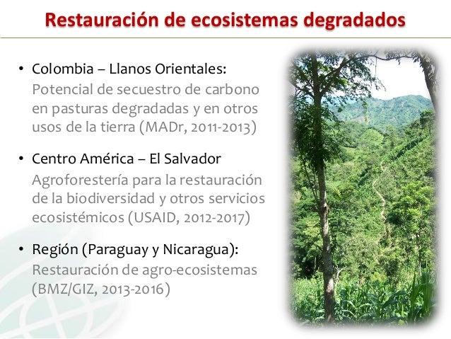 SISTEMAS DE INFORMACIÓN• Colombia (Llanos Orientales) :‒ Potencial de uso de la tierra con base en tipo de suelo,factores ...