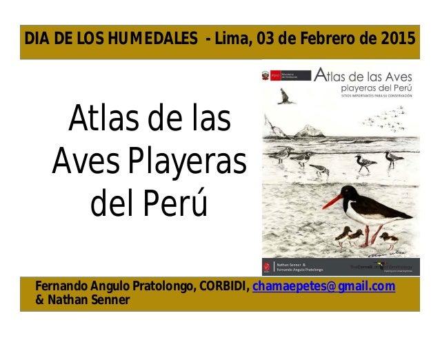 Atlas de las Aves Playeras del Perú Fernando Angulo Pratolongo, CORBIDI, chamaepetes@gmail.com & Nathan Senner DIA DE LOS ...