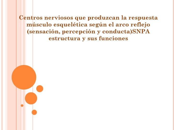 Centros nerviosos que produzcan la respuesta  músculo esquelética según el arco reflejo  (sensación, percepción y conducta...