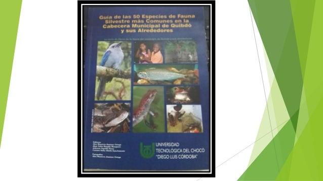 Guide des 50 espèces les plus communes de la faune dans la tête municipale de Quibdo et environs.