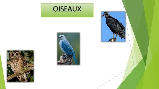 Les oiseaux sont regroupés en tant que classe, Cette classe se distingue par sa carrosserie aérodynamique, couvert de plum...