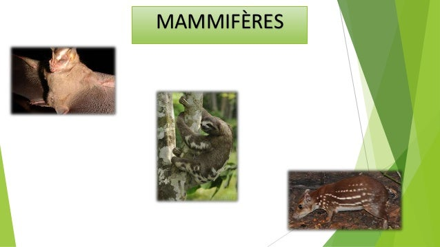 Les mammifères sont une classe de vertébrés qui ont une large gamme de adaptations l'environnement terrestre. mammifères s...
