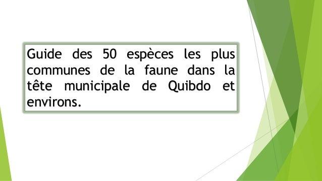 La Guide des 50 espèces les plus communes de la faune dans la tête municipale de Quibdo et environs, Il est le premier à ê...