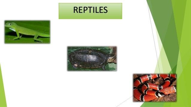 Reptiles ectothermes sont des vertébrés tétrapodes, qui ont un revêtement externe de la peau écailleuse. la peau est imper...