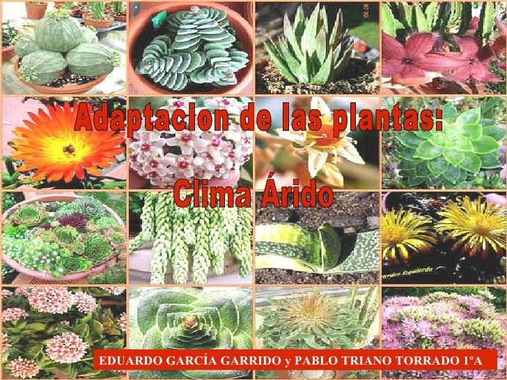 Plantas aridas - Plantas que aguantan temperaturas extremas ...