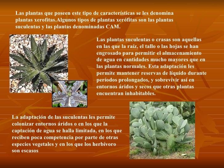 Plantas aridas for Cuales son los tipos de plantas