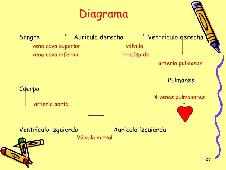 Encantador Diagrama De Sistema Circulatorio Foto - Anatomía de Las ...
