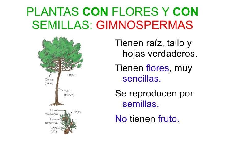 Presentaci n clasificaci n plantas for Plantas sin semillas