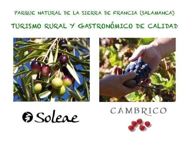 PARQUE NATURAL DE LA SIERRA DE FRANCIA (SALAMANCA)TURISMO RURAL Y GASTRONÓMICO DE CALIDAD