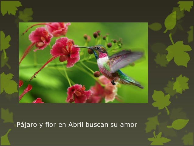 Frases Sobre El Bosque Y Los árboles En Españolpresentación