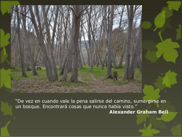 Frases Sobre El Bosque Y Los árboles En Españolpresentación Comenius