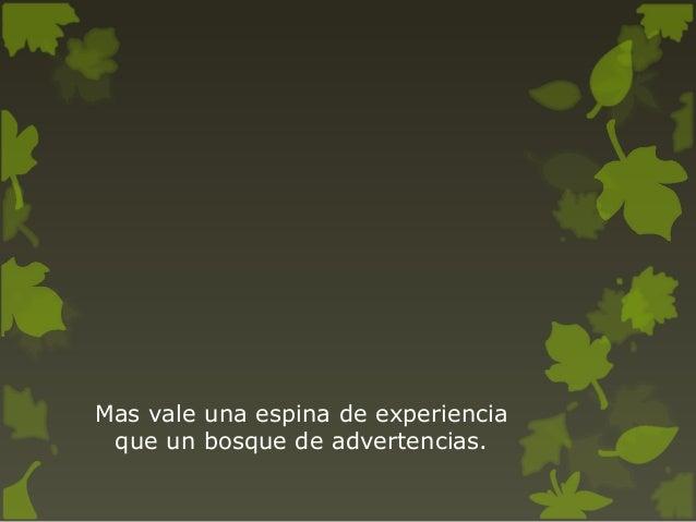 Frases Sobre El Bosque Y Los árboles En