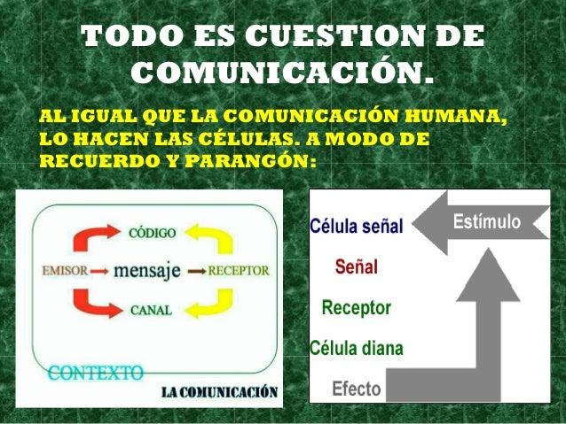 TODO ES CUESTION DE COMUNICACIÓN. AL IGUAL QUE LA COMUNICACIÓN HUMANA, LO HACEN LAS CÉLULAS. A MODO DE RECUERDO Y PARANGÓN: