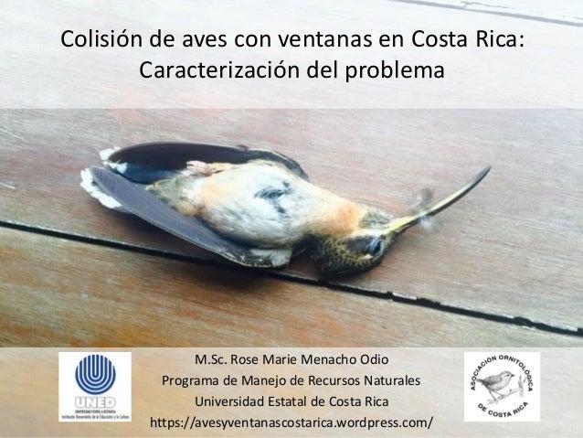 Colisión de aves con ventanas en Costa Rica: Caracterización del problema M.Sc. Rose Marie Menacho Odio Programa de Manejo...