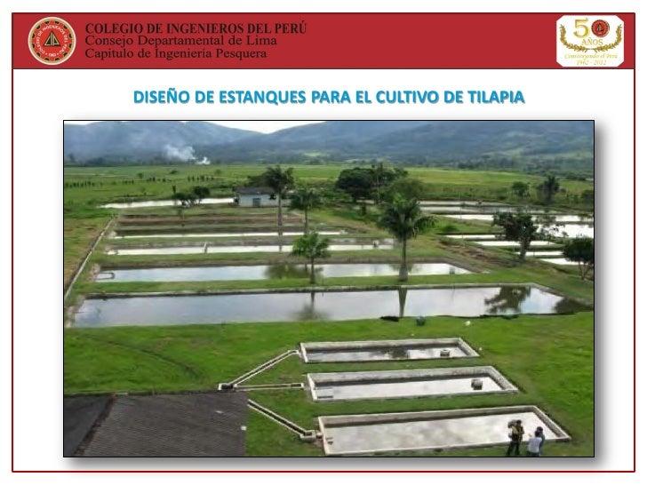 Cultivo de tilapia en el per y el mundo for Estanques para cria de tilapia