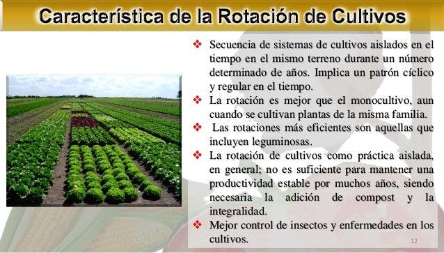 Asociaci n y rotaci n de cultivos for Rotacion cultivos agricultura ecologica
