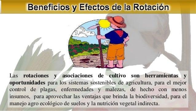 Asociaci n y rotaci n de cultivos Asociaciones de cultivos favorables