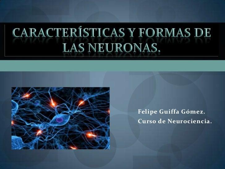 Felipe Guiffa Gómez.Curso de Neurociencia.