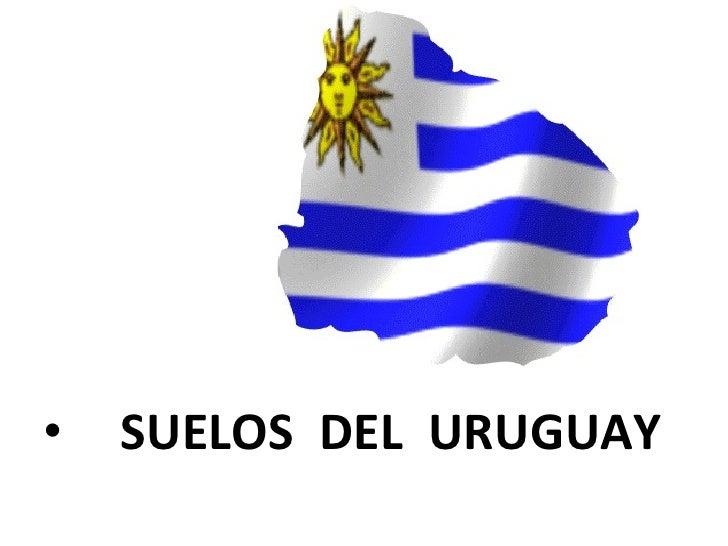 <ul><li>SUELOS  DEL  URUGUAY </li></ul>