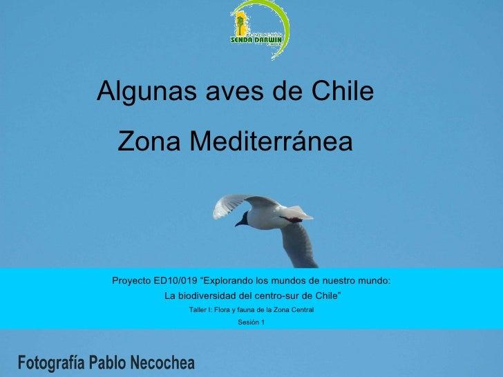 """Algunas aves de Chile Zona Mediterránea Proyecto ED10/019 """"Explorando los mundos de nuestro mundo: La biodiversidad del ce..."""