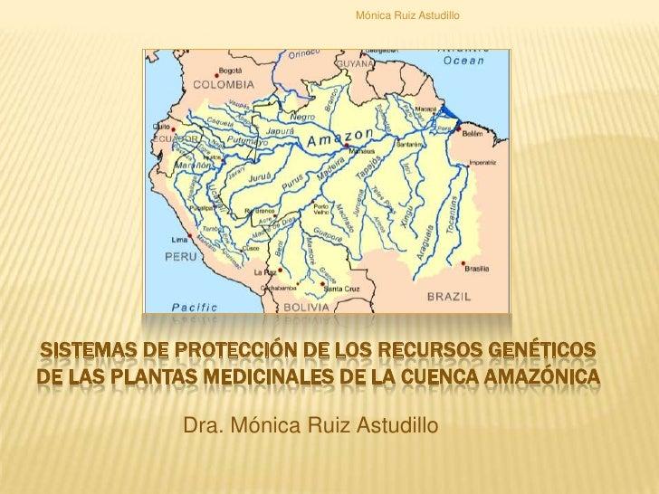 <br />Mónica Ruiz Astudillo<br />Sistemas de protección de los recursosgenéticos de lasplantasmedicinales de la cuencaama...
