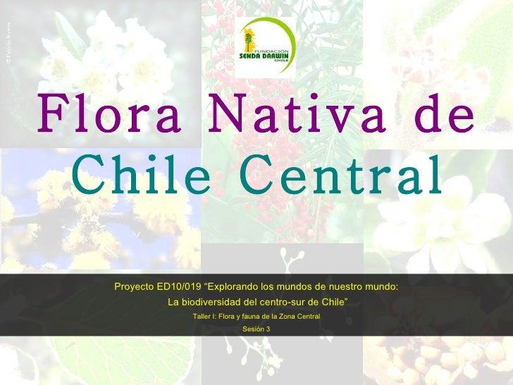 """Flora Nativa de  Chile Central Proyecto ED10/019 """"Explorando los mundos de nuestro mundo: La biodiversidad del centro-sur ..."""