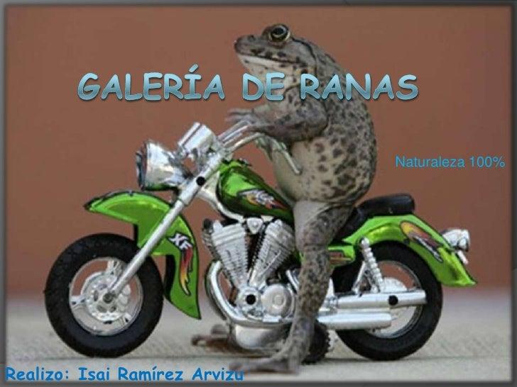 PresentacióN De Galeria De Ranas A Todo Color