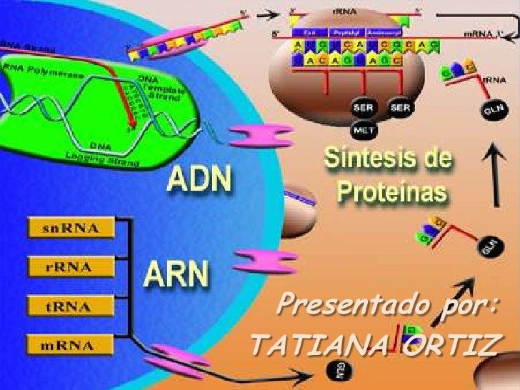Presentado por: <br />TATIANA ORTIZ<br />