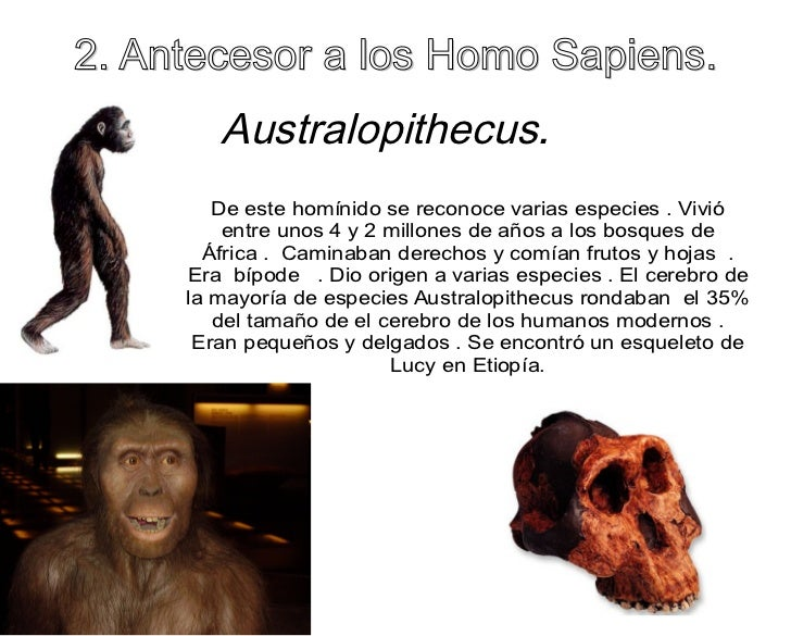 essay homo sapiens Essay on neanderthals and homo sapiens 2237 words | 9 pages main theories of neanderthal extinction the first theory is the competition theory, which claims that the homo sapiens and neanderthals had to compete for.