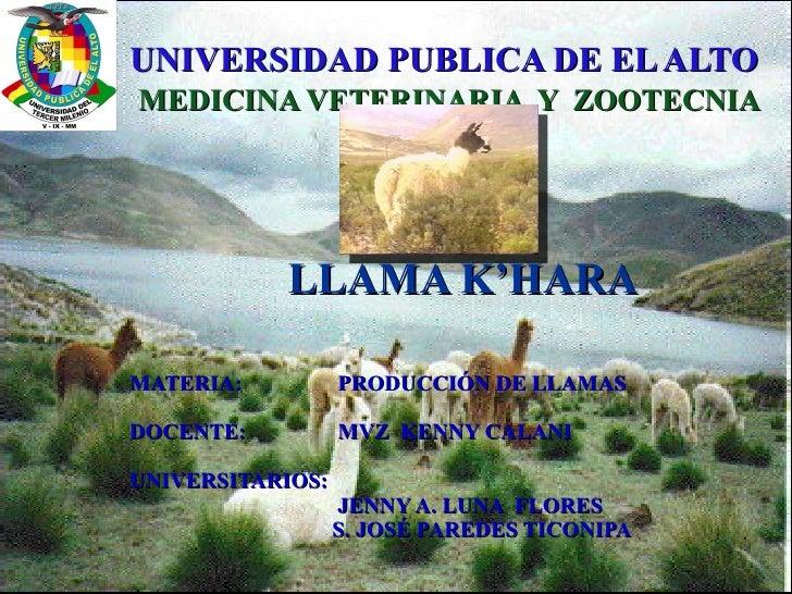 UNIVERSIDAD PUBLICA DE EL ALTO   MEDICINA VETERINARIA  Y  ZOOTECNIA LLAMA K'HARA MATERIA:   PRODUCCIÓN DE LLAMAS DOCENTE: ...