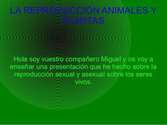 LA REPRODUCCIÓN ANIMALES Y         PLANTAS Hola soy vuestro compañero Miguel y os voy aenseñar una presentación que he hec...