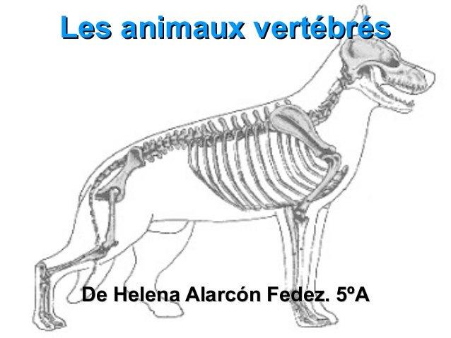 Les animaux vertébrés De Helena Alarcón Fedez. 5ºA
