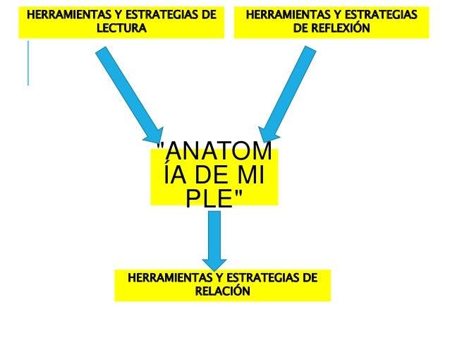 """HERRAMIENTAS Y ESTRATEGIAS DE  """"ANATOM  ÍA DE MI  PLE""""  LECTURA  HERRAMIENTAS Y ESTRATEGIAS  DE REFLEXIÓN  HERRAMIENTAS Y ..."""
