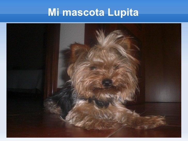 Mi mascota Lupita