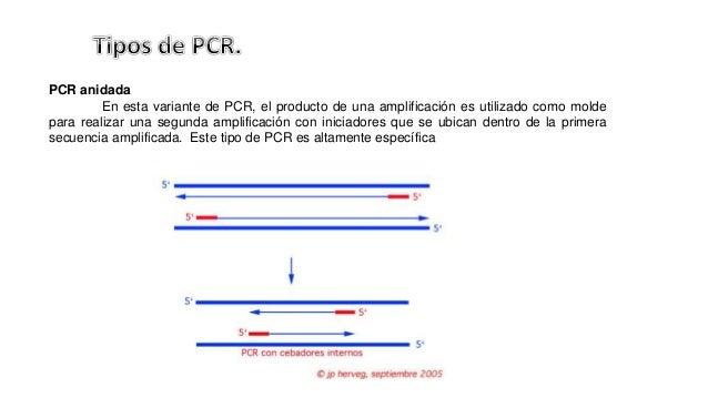 PCR CON TRANSCRIPTASA INVERSA EBOOK (Online PDF )