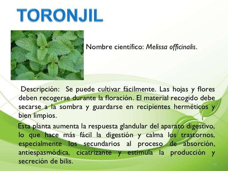 Presentaci n de plantas medicinales cartilla Nombres de plantas comunes