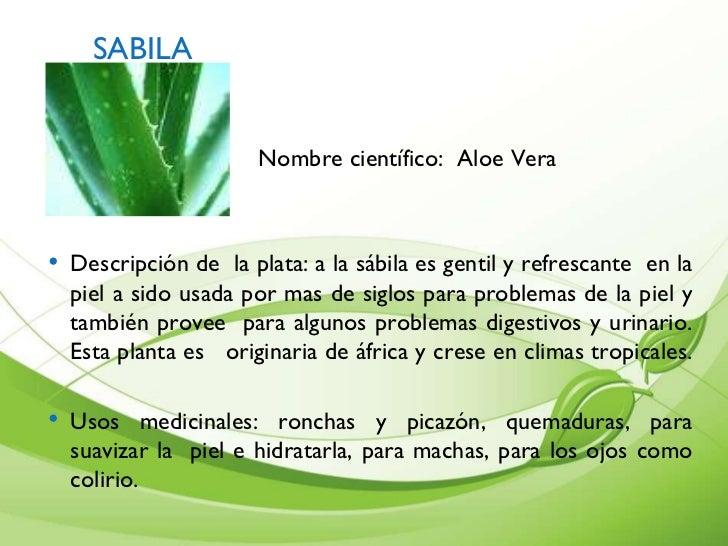 plantas medicinales y aromaticas en colombia