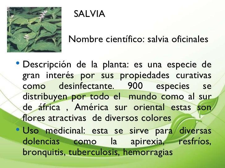 Presentaci n de plantas medicinales cartilla for La salvia en la cocina