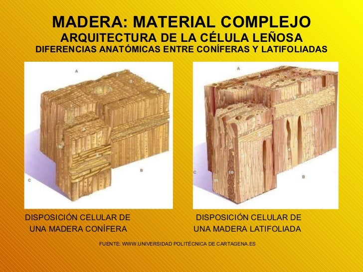 Presentaci n de power point fundamentos que sustentan el for Que es la veta de la madera