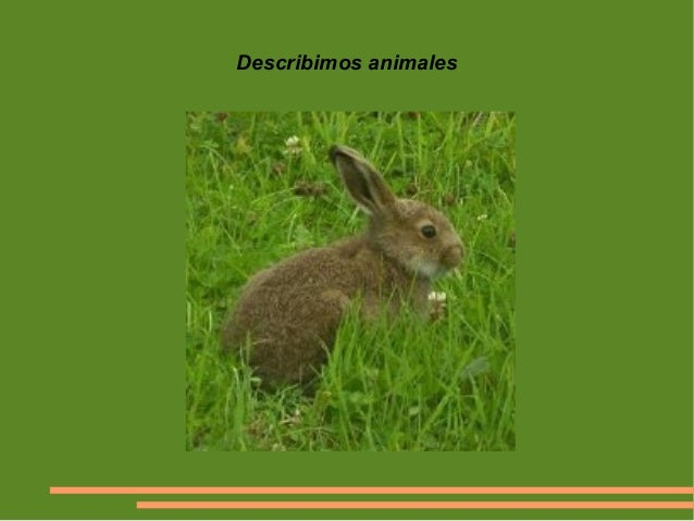 Describimos animales
