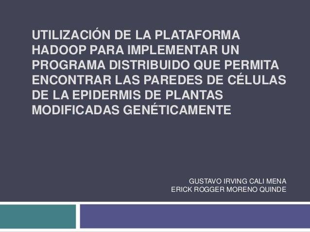 UTILIZACIÓN DE LA PLATAFORMA HADOOP PARA IMPLEMENTAR UN PROGRAMA DISTRIBUIDO QUE PERMITA ENCONTRAR LAS PAREDES DE CÉLULAS ...
