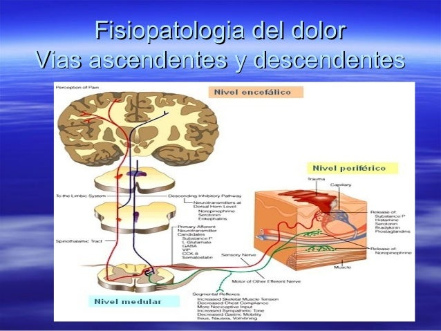Fisiopatologia del dolorVias ascendentes y descendentes