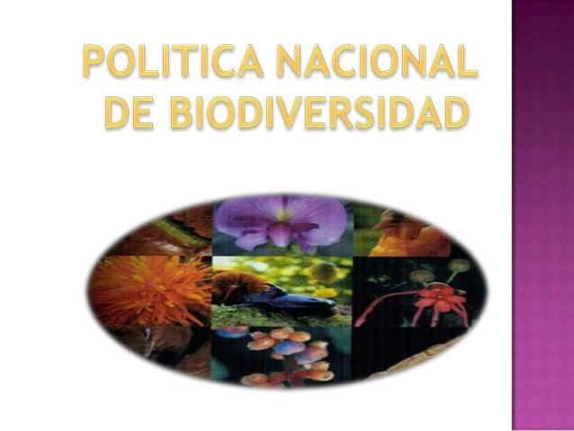 El Ministerio del Medio Ambiente y elDepartamento de Planeación Nacional, con elapoyo del Instituto Humboldt, elaboraron y...