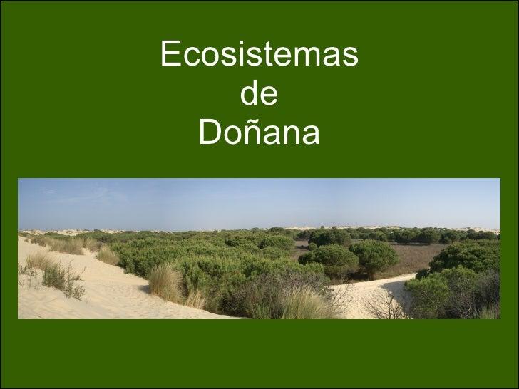 Ecosistemas de Doñana