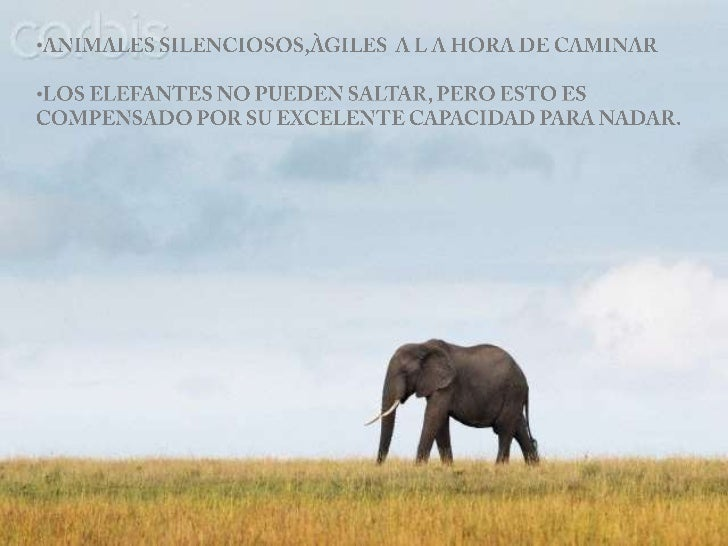 Presentación elefantes neli Slide 3