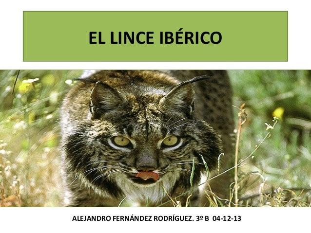 EL LINCE IBÉRICO  ALEJANDRO FERNÁNDEZ RODRÍGUEZ. 3º B 04-12-13