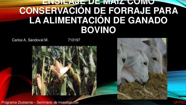ENSILAJE DE MAÍZ COMO CONSERVACIÓN DE FORRAJE PARA LA ALIMENTACIÓN DE GANADO BOVINO Carlos A. Sandoval M. 710197 Programa ...
