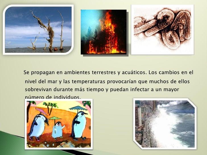 <ul><li>Se propagan en ambientes terrestres y acuáticos. Los cambios en el nivel del mar y las temperaturas provocarían qu...